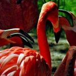 flamingo-klatch